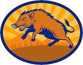 Wild Boar Pig Razorback Hog attacking