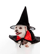 Dog wearing a witch hat and cape