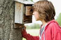 Middle school student looking in birdhouse