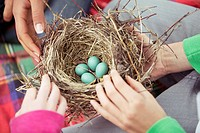Students examining a robins nest (thumbnail)