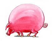fat big pig