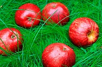 Big, red, ripe apples on the green bright grass