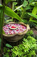 Flower heads arranged in a dish, in a Balinese, courtyard garden, Bali, Indonesia