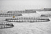 Salmon farms in Lofoten Islands, Norway