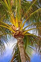 Photo of palms in tropical settings