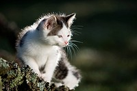 Kaetzchen auf Ast im Gegenlicht, kitten on branch in the back_light