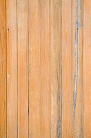 Texture of pine wood