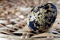 egg quail