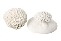 Corals on White Background