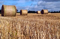 Straw bales in recently cut corn field, County Westmeath, Ireland