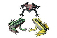 Frogs on White Background