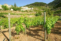 Banyalbufar Sierra de Tramuntana Majorca Balearic Islands Spain