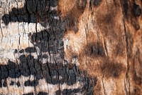 Burns on tree bark