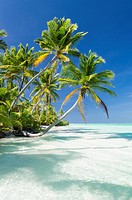 Tropical beach of an atoll lagoon and palm trees.