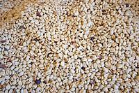 Dry Coffee, Jerico, Southwestern Antioquia, Antioquia, Colombia