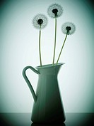 Three Dandelion flowers in an old fashioned vase
