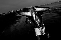 A fisherman carries a dead shark body at dawn on the beach of Manta, Ecuador, 9 September 2012  Every morning, hundreds of shark bodies and thousands ...