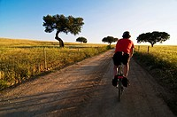 A ciclyst crosses a land road between a cereal fields in the Alentejo, Monsaraz, Portugal