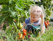 Germany, Bavaria, Girl picking tomatoes in garden