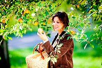 woman picking apples.
