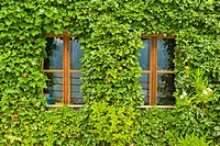 Austria, Upper Austria, Hallstatt, View of house covered with ivy