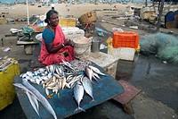 India, Tamil Nadu, Chennai, fish market