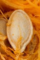 Seeds inside the pumpkin