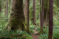 A trail throug the largest Sitka spruce groves left in the world.
