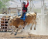 Socorro, New Mexico, USA. Competitor taking part in the bull riding competition during the annual rodeo held in Socorro, New Mexico, USA.