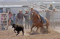Socorro, New Mexico, USA. Man taking part in the calf roping competition at the annual rodeo held in Socorro, New Mexico.