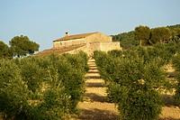 Randa Treurer olive grove Algaida Es Pla Mallorca Balearic Islands Spain