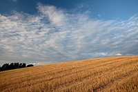 After harvest  Suwalski region  Poland