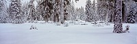 Winter Snowstorm in the Lake Tahoe Area, California