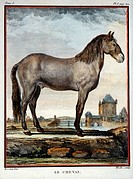 Horse, Hand_Colored Engraving, 1752