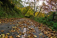 Secondary road in autumn in Asturias, Spain
