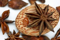 star anise seed with its distinctive flavour of aniseed