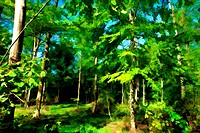 Beautiful Fairy Forest digital art manipulation