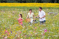Family with bicycles walking among wildflowers in sunny meadow