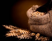 Wheat in burlap bag