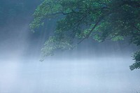 Trees and morning haze at Juniko Lake, Aomori Prefecture