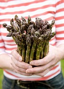 Hands holding bunch of fresh asparagus