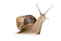 Close_up of a snail on a white background,silhouette