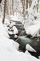 Winter snow along still creek in mount hood national forest, oregon, united states of america