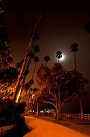 Moonlit scene in palisades park, santa monica, california, united states of america