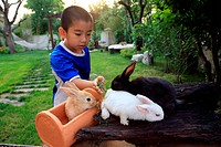 boy with bunny rabbits
