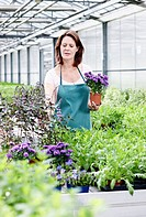 Germany, Bavaria, Munich, Mature woman in greenhouse with aster plants