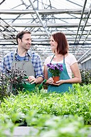 Germany, Bavaria, Munich, Mature man and woman in greenhouse with rocket and basil plant