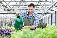 Germany, Bavaria, Munich, Mature man in greenhouse watering rocket plant (thumbnail)