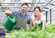 Germany, Bavaria, Munich, Mature man and woman watering rocket plant in greenhouse (thumbnail)