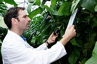 Germany, Bavaria, Munich, Scientist in greenhouse examining aubergine plants (thumbnail)